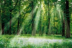 Rayonnement solaire et photosynthèse