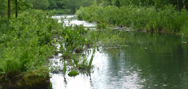 Biodiversité aquatique : des enjeux juridiques et scientifiques