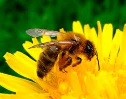 Fin du buzz : arbitrage responsable de Matignon sur les néonicotinoïdes