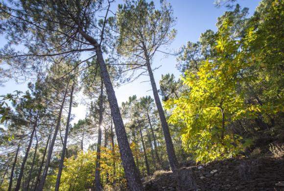 Bâtir des forêts biodiverses