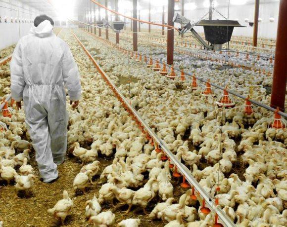 Contre l'industrie de la production animale, faisons front commun