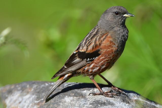 De moins en moins d'oiseaux dans nos campagnes