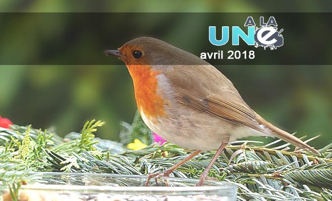 Pour France Nature Environnement la disparition des oiseaux n'est pas une fatalité