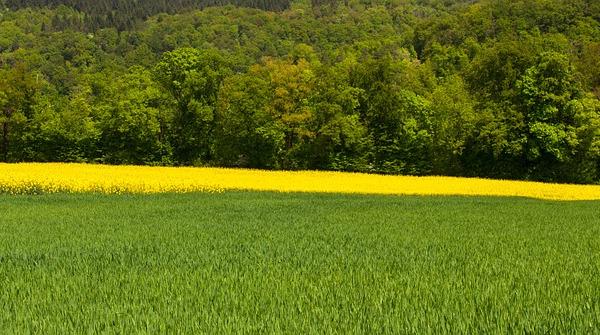 Avis favorable pour le parc national des forêts de Champagne et Bourgogne