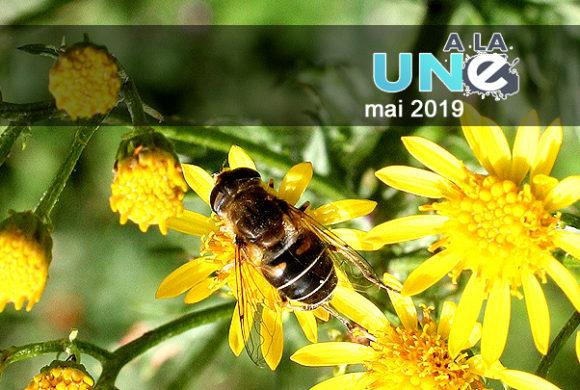 Biodiversité : «Construisons les bases d'un accord international ambitieux»