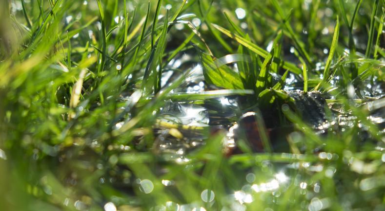 Plan de sortie du glyphosate : le centre de ressources apporte des solutions concrètes aux agriculteurs