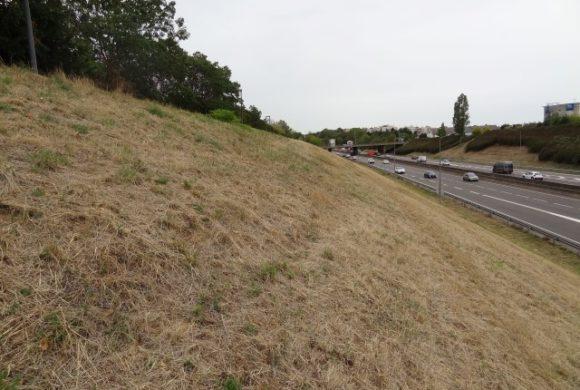 Première afforestation biodiverse citoyenne bénévole en France d'un délaissé routier